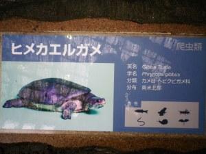 Contoh keterangan di tiap kandang binatang, Ueno Zoo