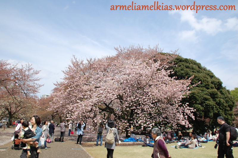 Hanami 2012, Shinjuku National Gyoen